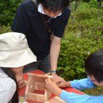 6月19日:里山夏の野鳥