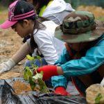5月20日:野菜苗植え&ログテントづくり