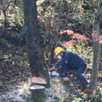 自然体験学習会:五感で楽しむ里山の12ヶ月(2020.11.8)